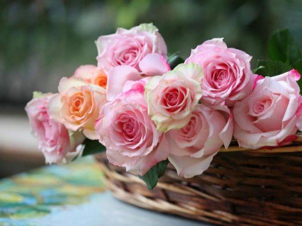 Чтобы получить красивые цветы, нужно потратить время и силы
