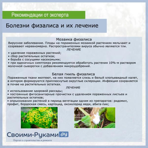 Физалис: выращивание и уход за разными видами растения