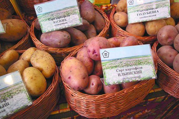 Выберете хороший сорт картофеля