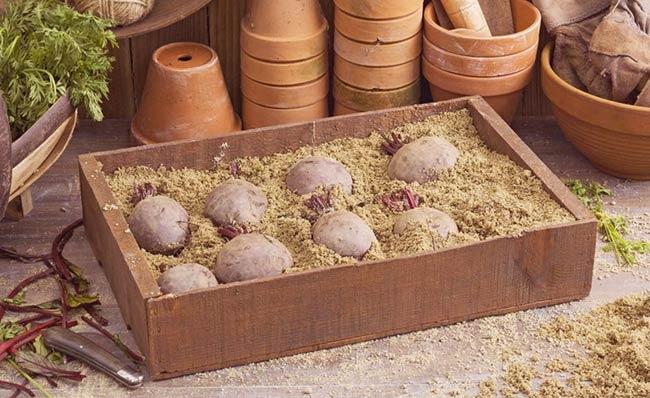 хранение-свеклы-в-песке