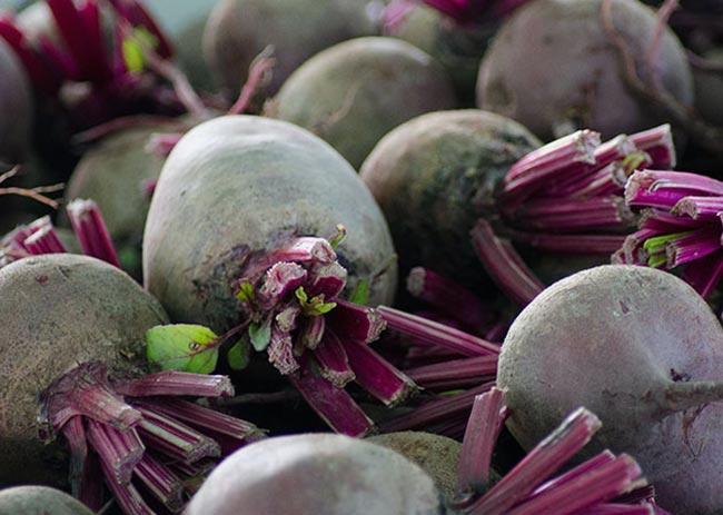 обрезка-ботвы-для-длительного-хранения-корнеплодов