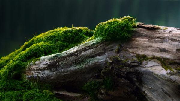 Растущий в тени мох является индикатором кислотности грунта.
