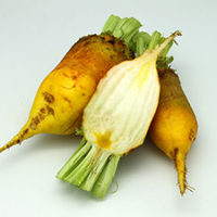 «Эккендорфская желтая»