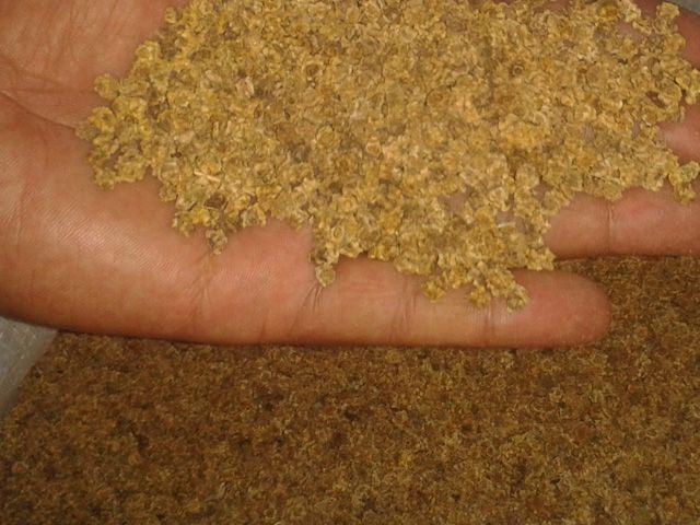 Неподготовленные семена кормовой свеклы