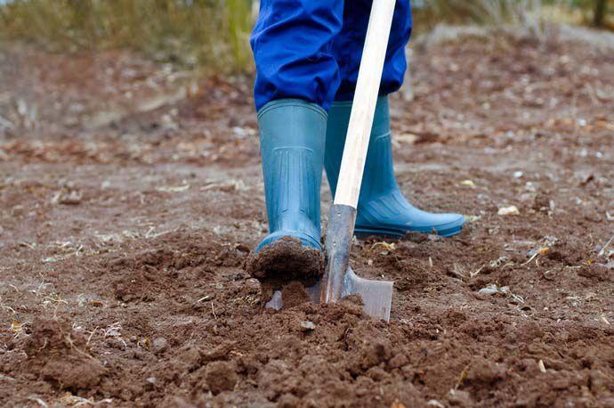 Перекапывание почвы - обязательная процедура перед посадкой