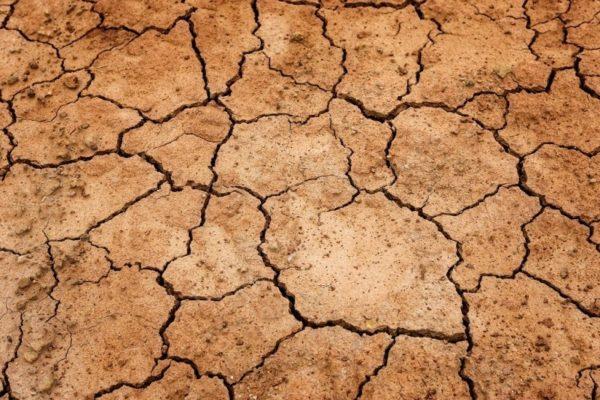 Нехватка влаги — основная причина заражения растений