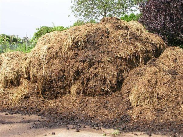 Собранный навоз нужно тщательно очистить, подготовить, и только затем передавать в распоряжение земледельцев