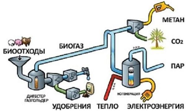 Схема получения метана из биологических отходов жизнедеятельности животных