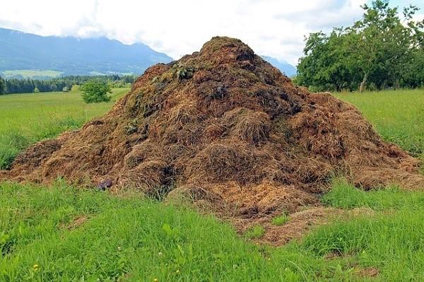 Используя биологические добавки, можно довольно быстро переработать большие объемы отходов