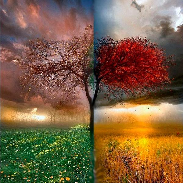 Можно сажать жимолость как весной, так и осенью