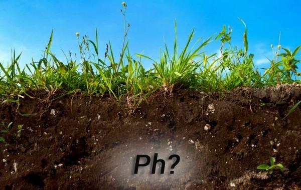 Муравьи сильно окисляют почву