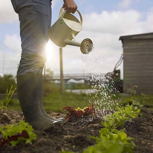 Неправильно подобранная тактика избавления от муравьев может навредить растениям на огороде