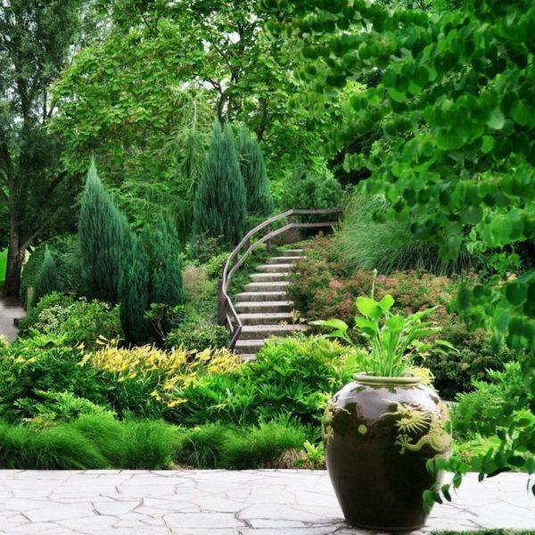 Раскидистые сорта смотря эффектно в соседстве с большими деревьями