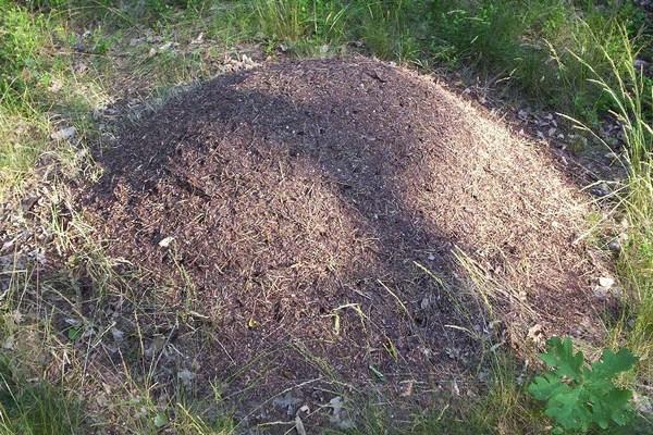Важно понимать, что видимый над землей муравейник – лишь «верхушка айсберга»