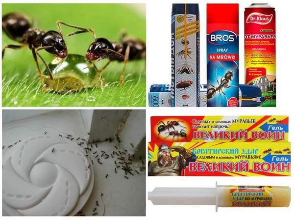 При попытке залить муравейник «химией» можно отравить землю
