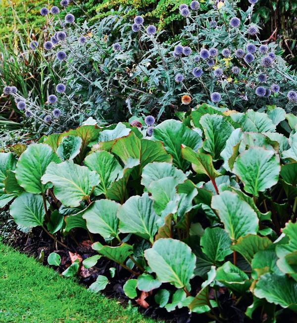 Закаленную рассаду можно высаживать в открытый грунт