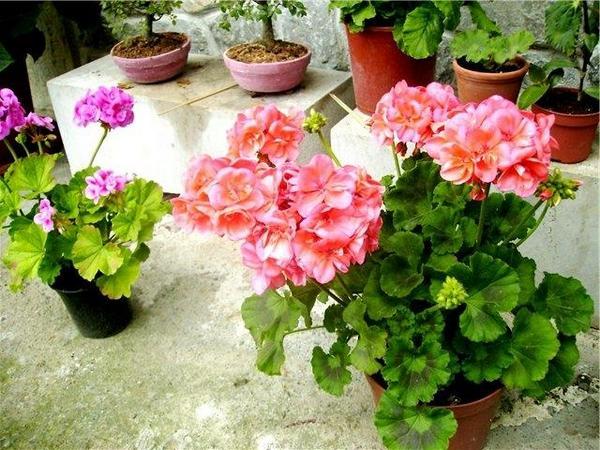 Такой прекрасный цветок можно купить всего за 200 рублей