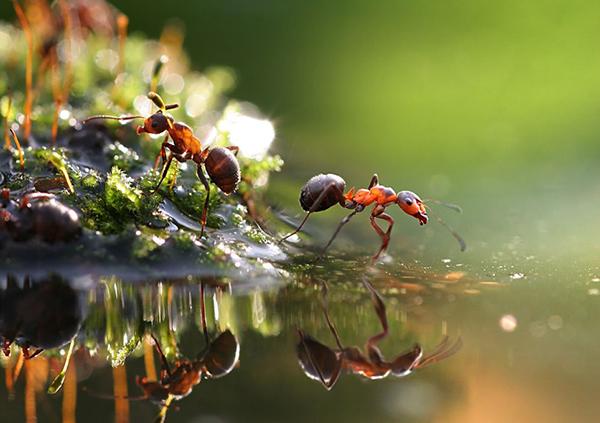 Другие агрономы утверждают, что вреда от муравьев больше, чем пользы