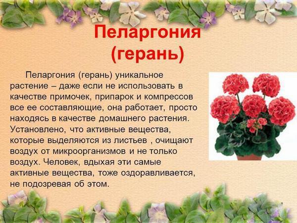 Такое растение обладает некоторым лечебным эффектом