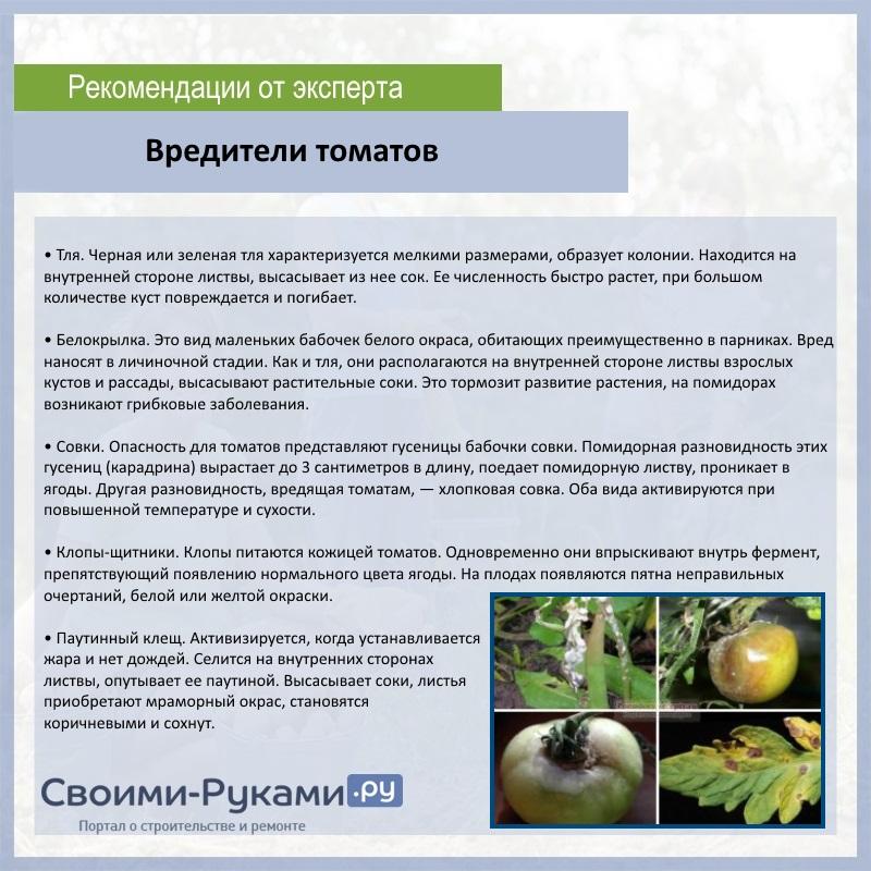 Вредители томатов