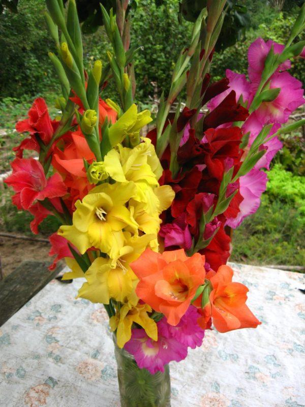Гладиолусы превосходно смотрятся в вазе