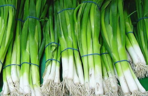 Зелень от репчатого лука широко используется в готовке