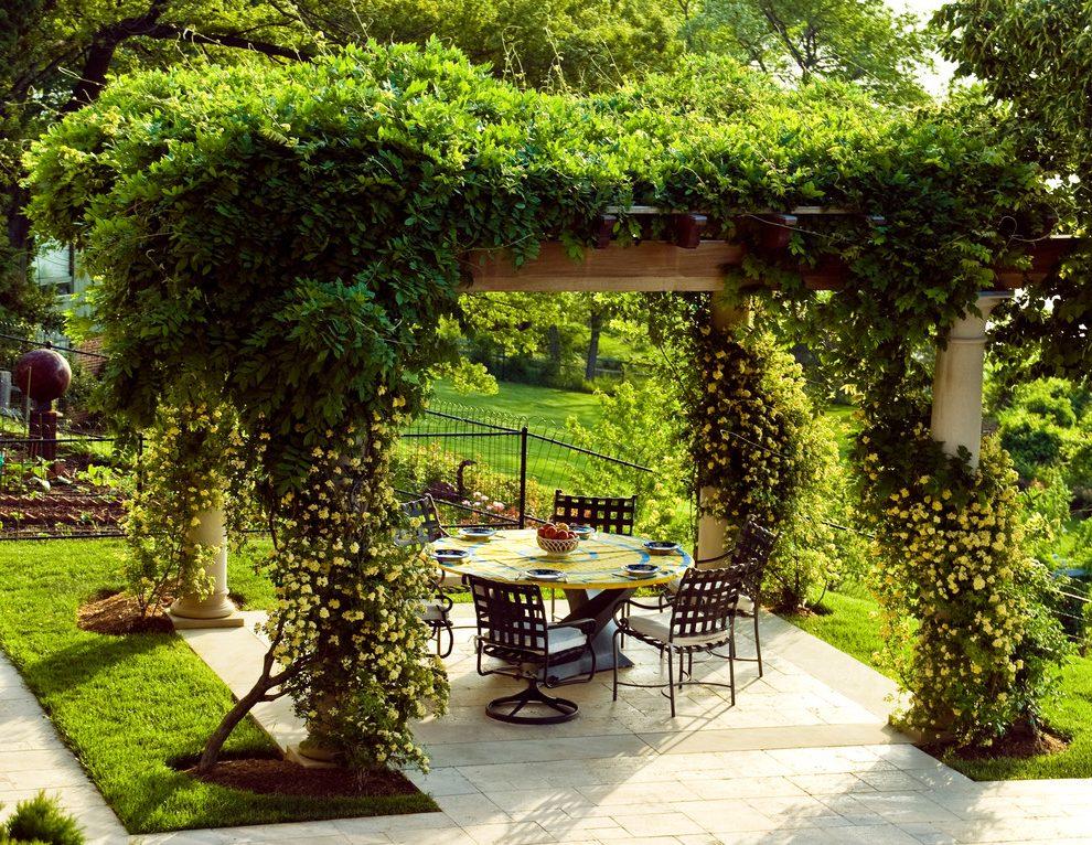 О выборе растений для озеленения беседки