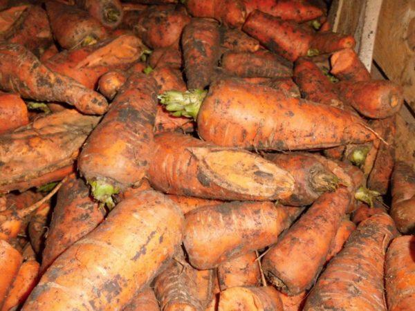 Отделение моркови от земли