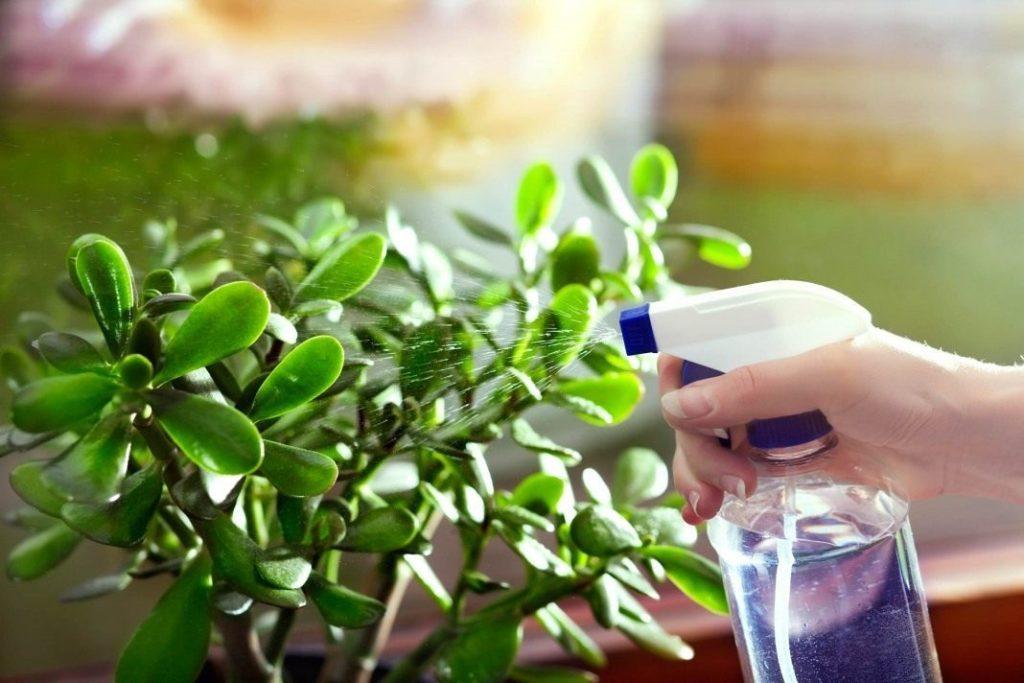Поливать растение нужно правильно