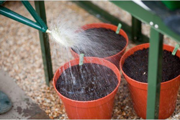 После посадки почву необходимо как следует пролить