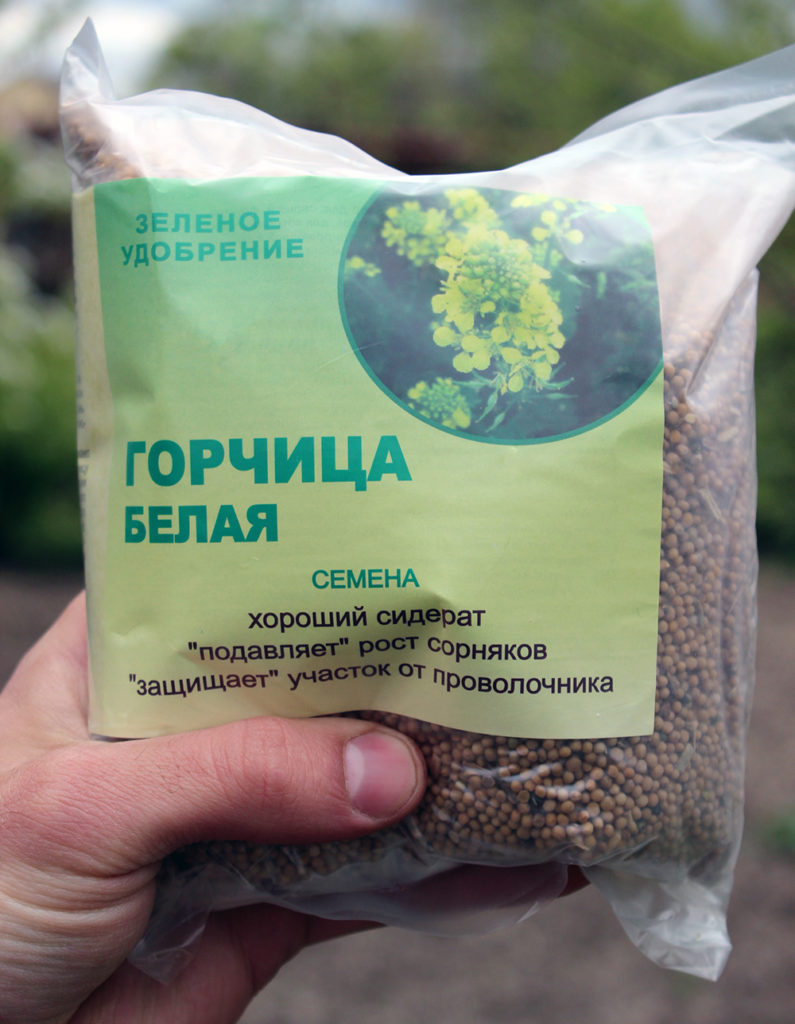 Семена горчицы белой