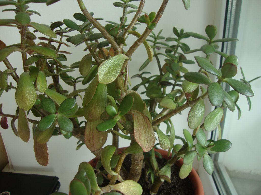 Старение - одна из причин опадения листьев