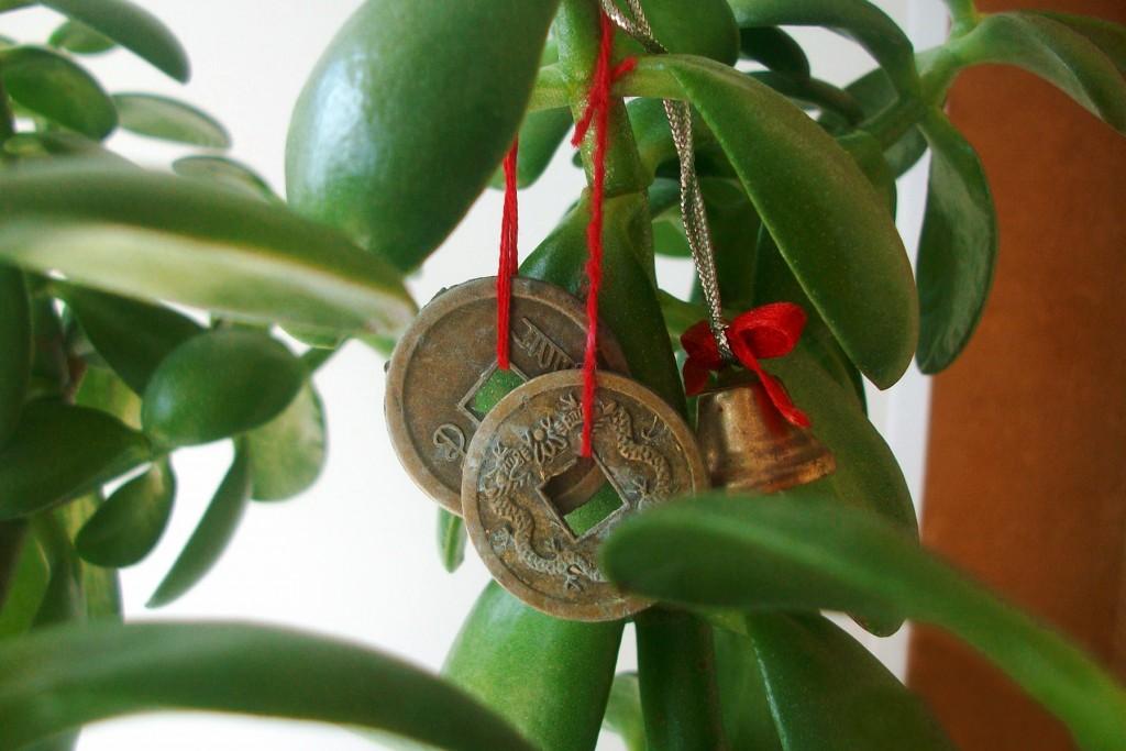 Считается, что денежное дерево привлекает богатство в дом