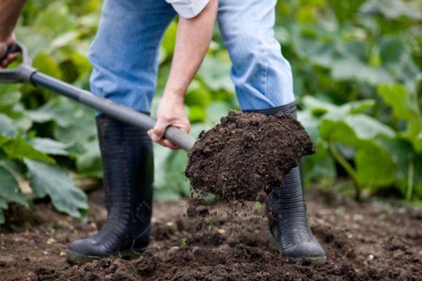 Тщательно перекопайте получившуюся земляную смесь до её однородности
