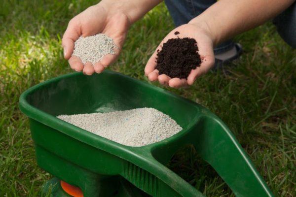Удобрять почву, в которой растёт хвойник, нужно не только весной, но и в летний период