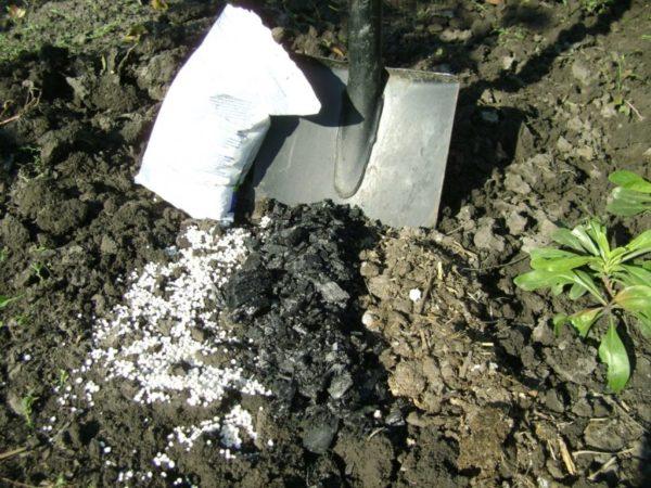 Как и любое растение, флоксы нуждаются в подпитке полезными веществами и минералами