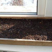 В ящик для посадочного материала поместить семена, несильно присыпав их почвой