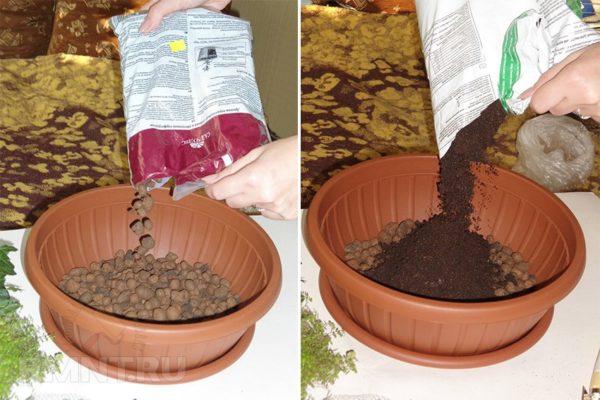 На дно горшка нужно засыпать дренаж, сверху – почву для хвойных культур