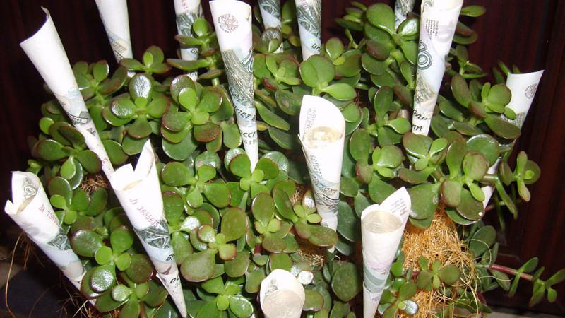 Фэн-шуй и денежное дерево