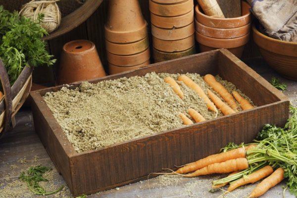 Часто хранят морковь именно в песке