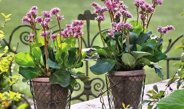 Высаживают растения и выносят на открытый воздух