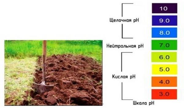 Нужно следить за кислотностью грунта