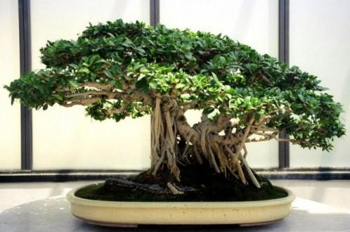 Будьте внимательны к бонсаю, и сможете вырастить настоящий растительный шедевр