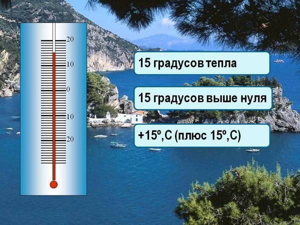Зимой мирабилис может жить при 15 градусах тепла