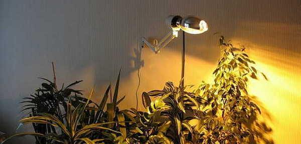В домашних условиях нужно обеспечить искусственное освещение цветку
