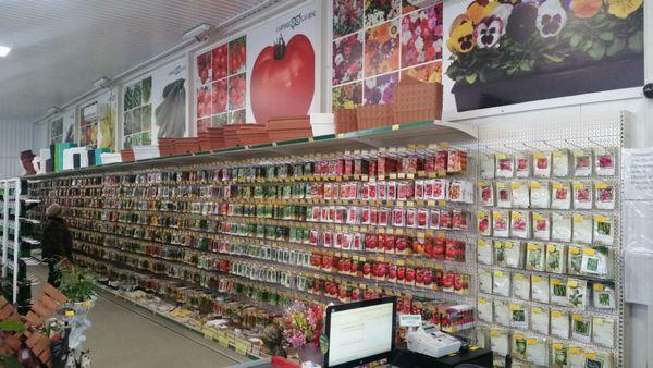 Лучше приобретать материал для посадки в специализированных магазинах