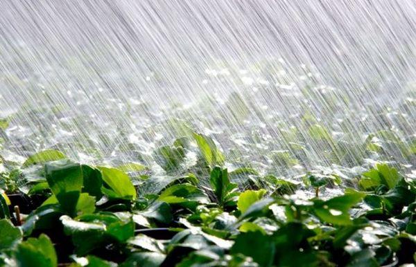 Погода часто влияет на появление такой болезни
