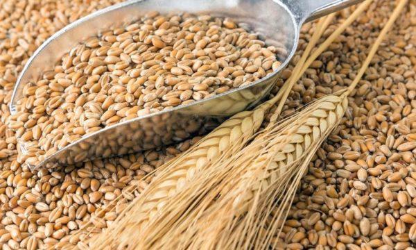 Пшеничные зерна часто используются при приготовлении дрожжевых подкормок