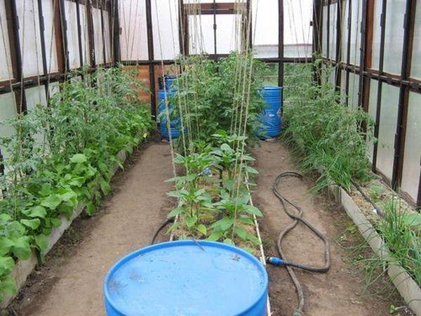 Важно правильно распределять посадки, чтобы растениям было комфортно