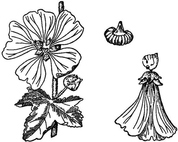 Интересен внешний вид этого цветка